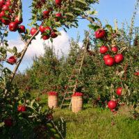 Biolandhof Brandenburg Nachhaltiger Anbau