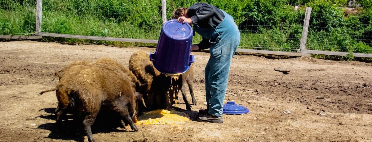 Jugendhilfe Tagesbetreuung Tierversorgung